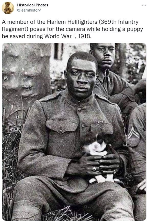 Photograph - Historical Photos @learnhistory A member of the Harlem Hellfighters (369th Infantry Regiment) poses for the camera while holding a puppy he saved during World War I, 1918.