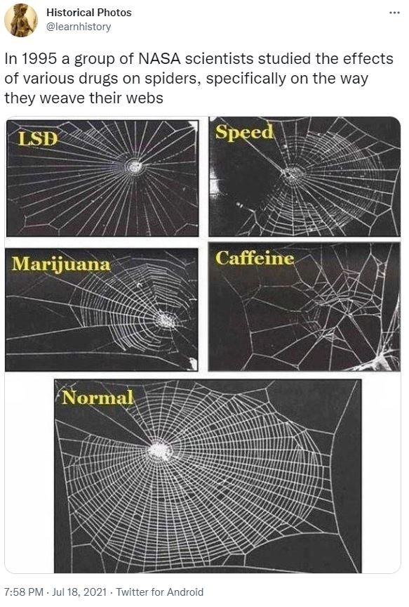 Black - Historical Photos ... @learnhistory In 1995 a group of NASA scientists studied the effects of various drugs on spiders, specifically on the way they weave their webs LSD Speed Caffeine Marijuana Normal 7:58 PM - Jul 18, 2021 - Twitter for Android