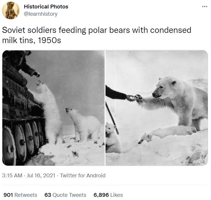 Dog - Historical Photos @learnhistory Soviet soldiers feeding polar bears with condensed milk tins, 1950s 3:15 AM Jul 16, 2021 - Twitter for Android 901 Retweets 63 Quote Tweets 6,896 Likes