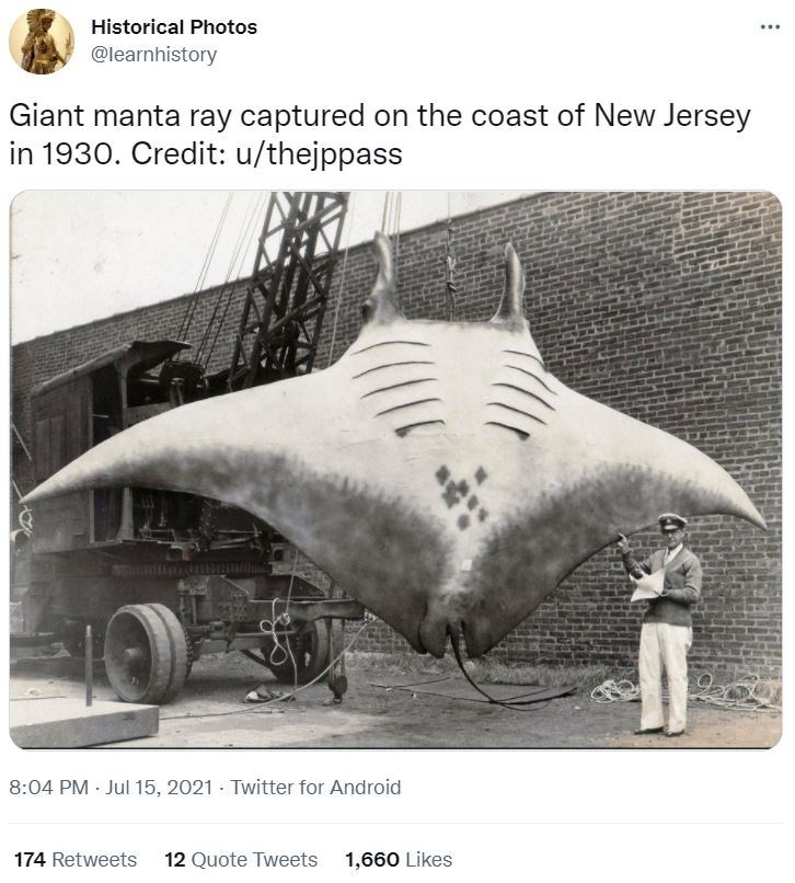 Tire - Historical Photos ... @learnhistory Giant manta ray captured on the coast of New Jersey in 1930. Credit: u/thejppass 8:04 PM · Jul 15, 2021 - Twitter for Android 174 Retweets 12 Quote Tweets 1,660 Likes
