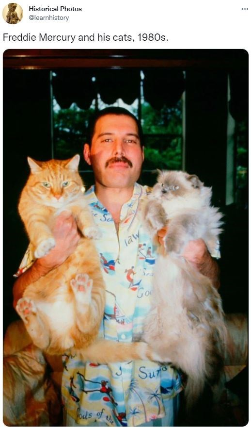 Cat - Historical Photos @learnhistory ... Freddie Mercury and his cats, 1980s. Se law Go Sur ods of he