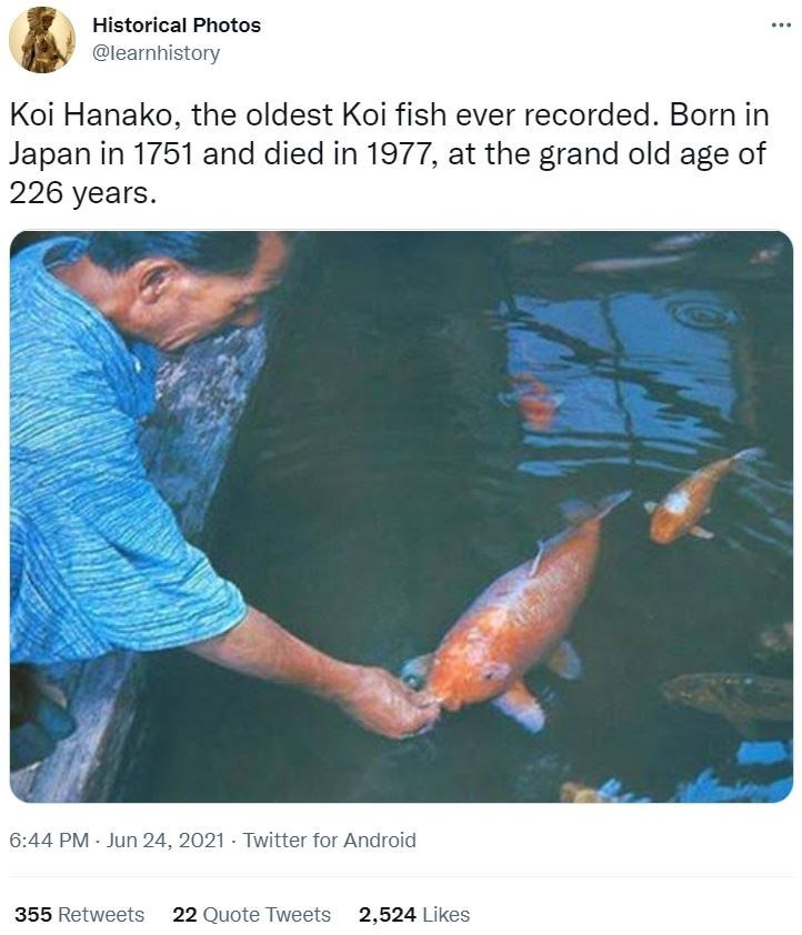 Muscle - Historical Photos @learnhistory Koi Hanako, the oldest Koi fish ever recorded. Born in Japan in 1751 and died in 1977, at the grand old age of 226 years. 6:44 PM - Jun 24, 2021 - Twitter for Android 355 Retweets 22 Quote Tweets 2,524 Likes