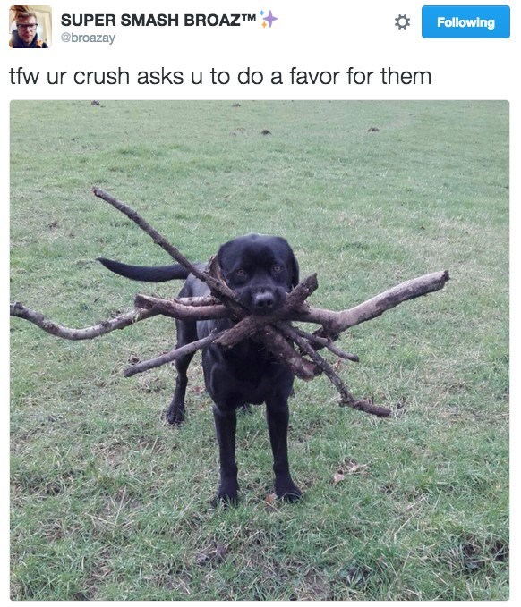 Working animal - SUPER SMASH BROAZTM @broazay Following tfw ur crush asks u to do a favor for them