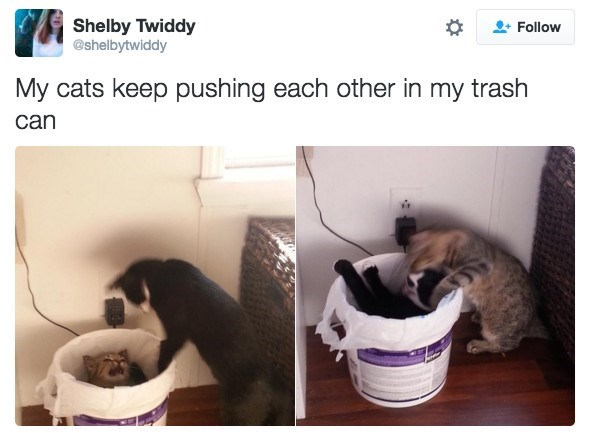 Product - Shelby Twiddy @shelbytwiddy Follow My cats keep pushing each other in my trash can