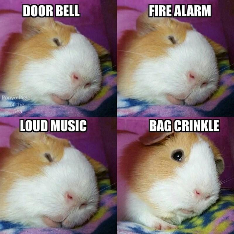 Nose - DOOR BELL FIRE ALARM Ponyo Piglet of the LOUD MUSIC BAG CRINKLE