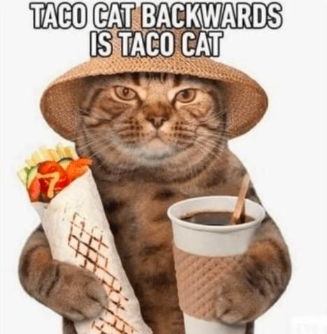 Cat - TACO CAT BACKWARDS IS TACO CAT