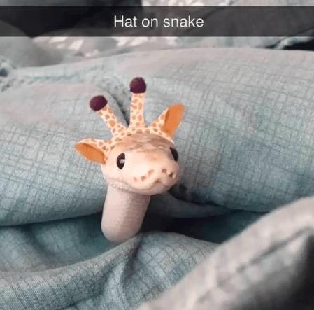 Giraffe - Hat on snake
