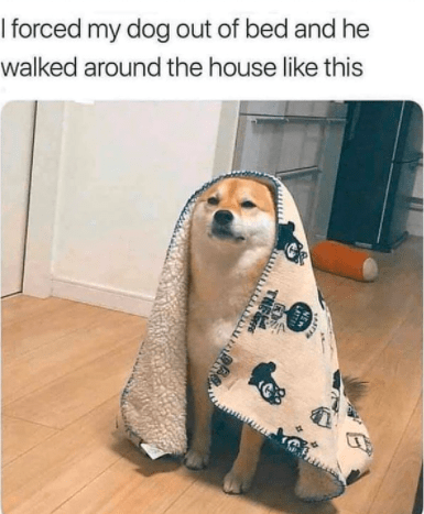 Dog - I forced my dog out of bed and he walked around the house like this THE