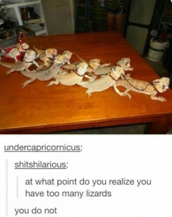 Light - undercapricornicus: shitshilarious: at what point do you realize you have too many lizards you do not