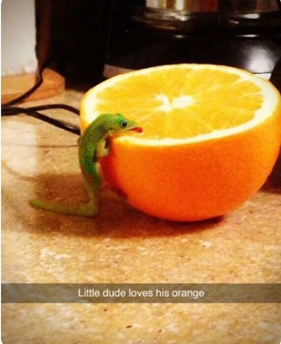 Food - Little dude loves his orange