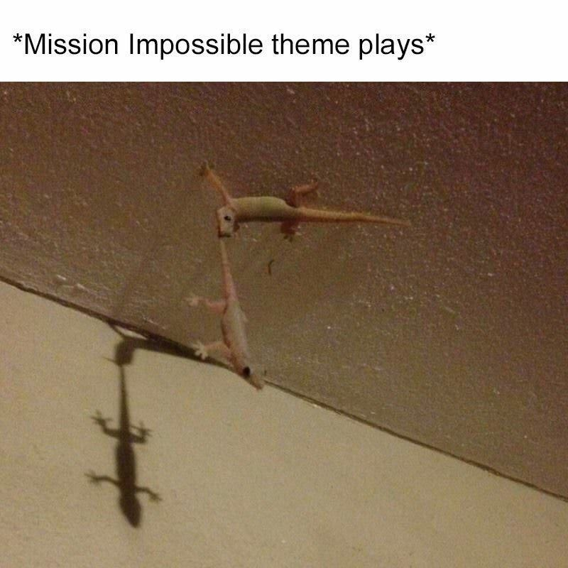 Reptile - *Mission Impossible theme plays*