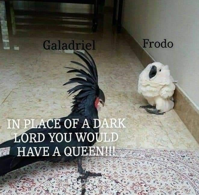 Bird - Galadriel Frodo IN PLACE OFA DARK LORD YOU WOULD A HAVE A QUEEN!!I