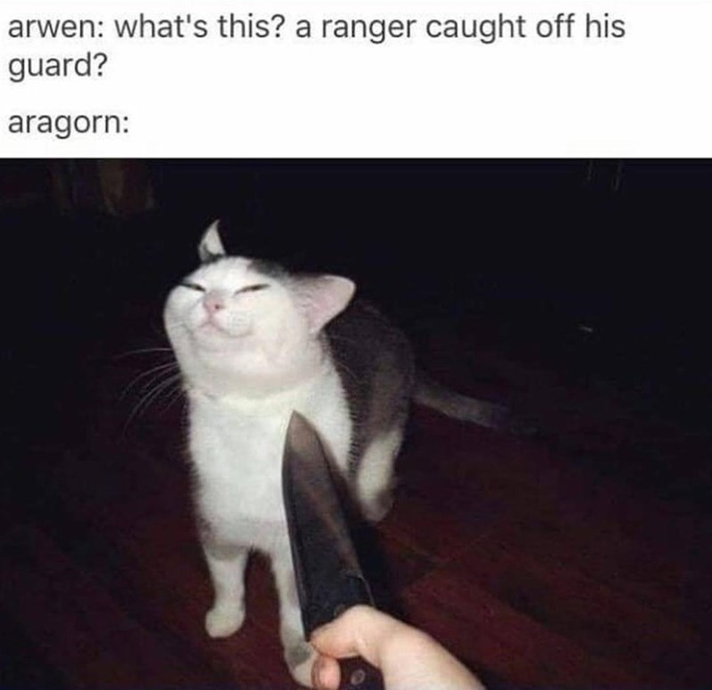 Cat - arwen: what's this? a ranger caught off his guard? aragorn:
