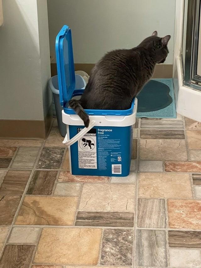 Cat - fragrance free ISSEMENT