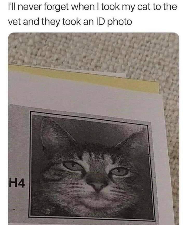Cat - 'll never forget when I took my cat to the vet and they took an ID photo H4