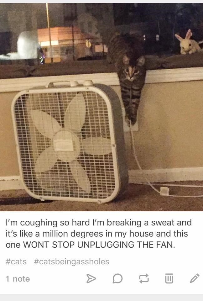 Font - I'm coughing so hard l'm breaking a sweat and it's like a million degrees in my house and this one WONT STOP UNPLUGGING THE FAN. #cats #catsbeingassholes 1 note