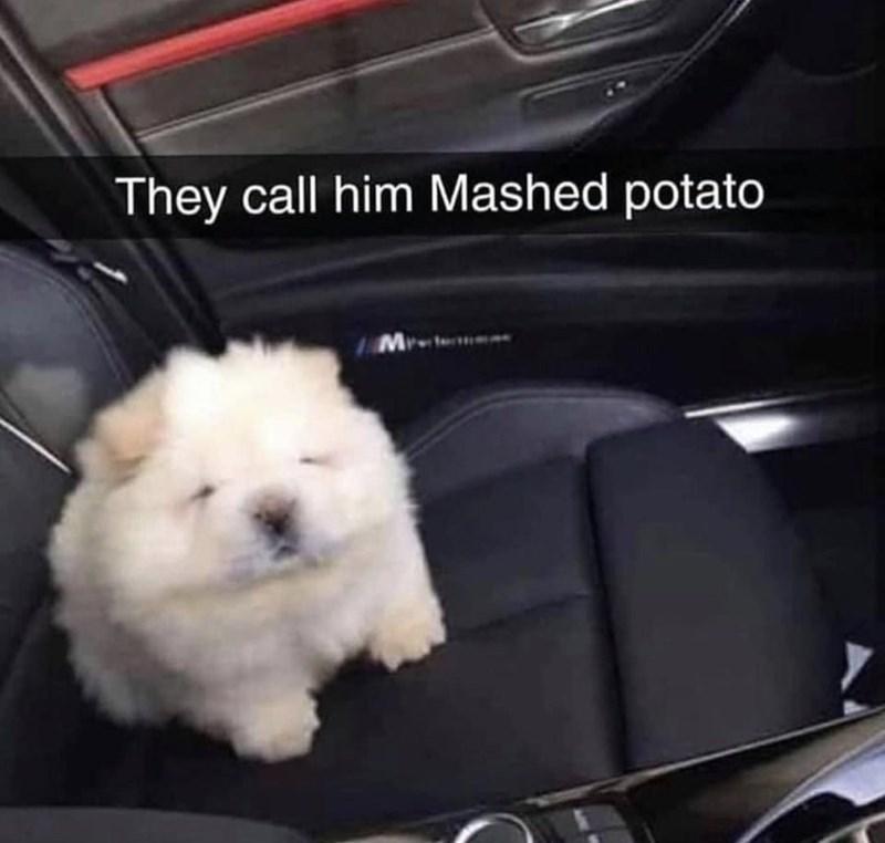 Dog - They call him Mashed potato IMrte