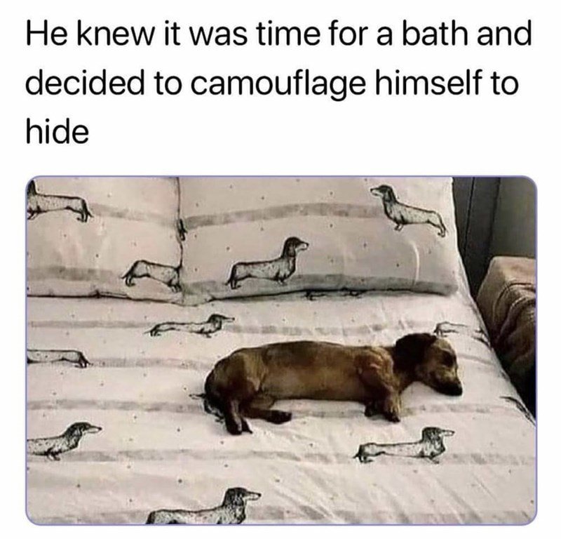 Dog - He knew it was time for a bath and decided to camouflage himself to hide