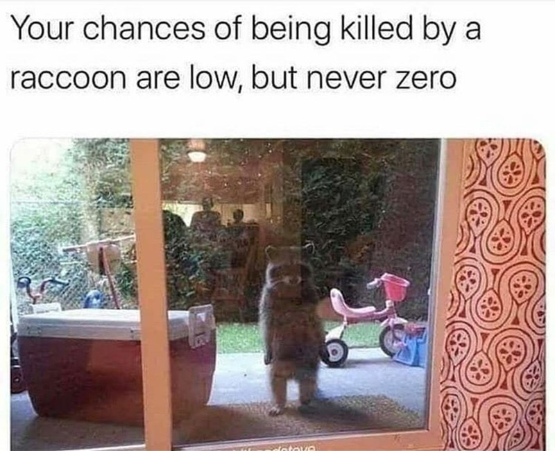 Plant - Your chances of being killed by a raccoon are low, but never zero