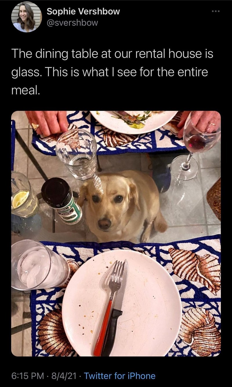 Cheezburger Image 9633571840