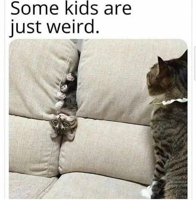 Cat - Some kids are just weird.