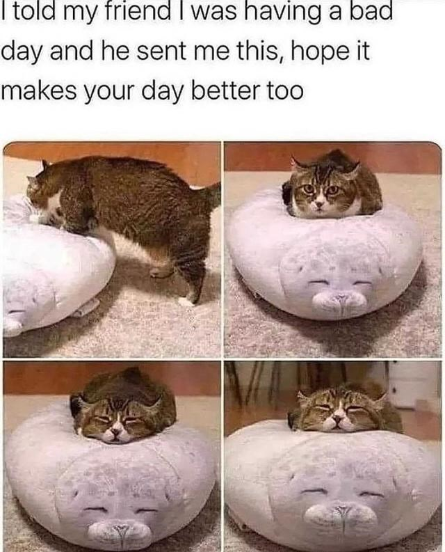 Cat - I told my friend I was having a bad day and he sent me this, hope it makes your day better too