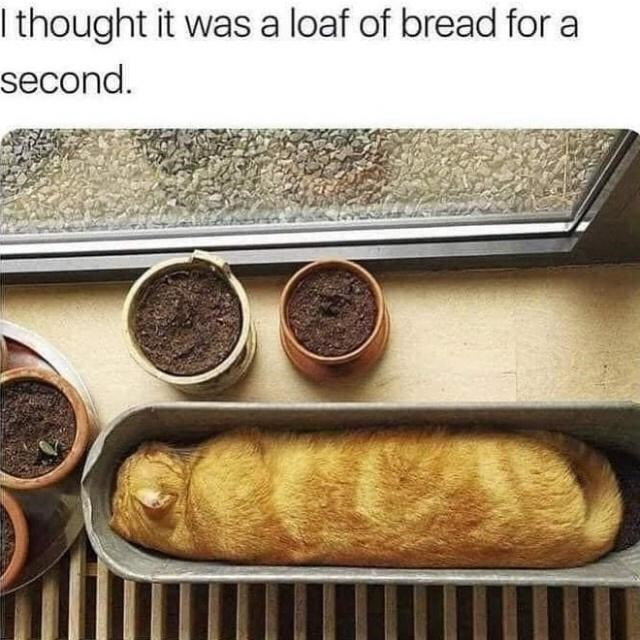 Food - I thought it was a loaf of bread for a second.