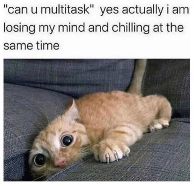 """Cat - """"can u multitask"""" yes actually i am losing my mind and chilling at the same time"""