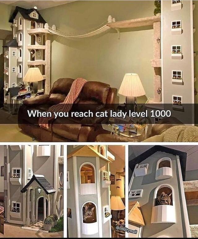 Property - 日 When you reach cat lady level 1000 @odditymal