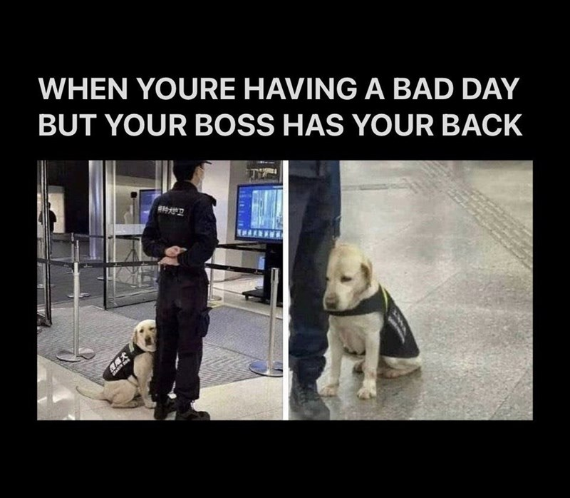 Dog breed - WHEN YOURE HAVING A BAD DAY BUT YOUR BOSS HAS YOUR BACK 种学卫 美