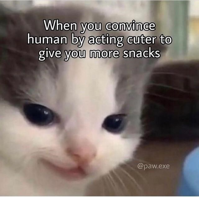 Cat - When you convince human by acting cuter to give you more snacks @paw.exe