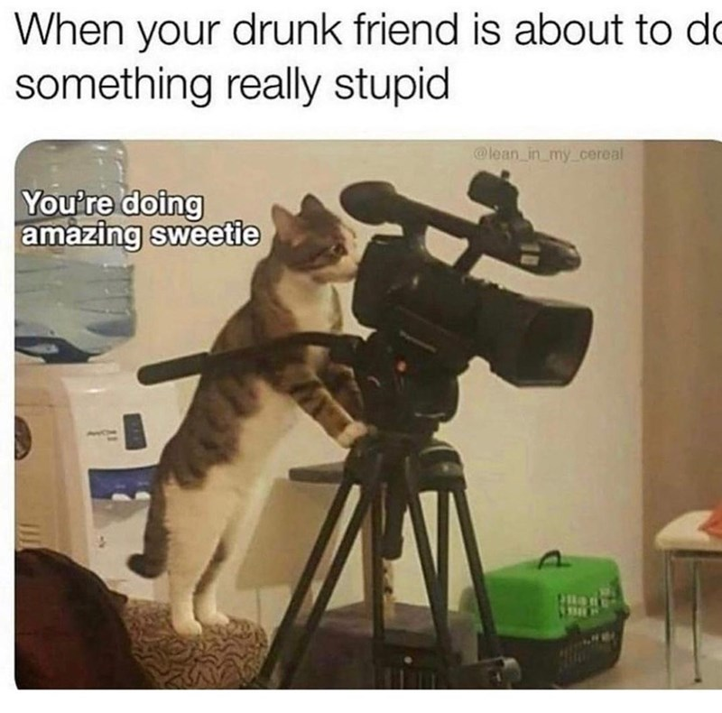 Cat - When your drunk friend is about to do something really stupid @lean in_my_cereal You're doing amazing sweetie