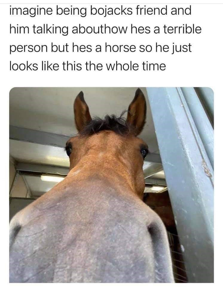 Horse - imagine being bojacks friend and him talking abouthow hes a terrible person but hes a horse so he just looks like this the whole time
