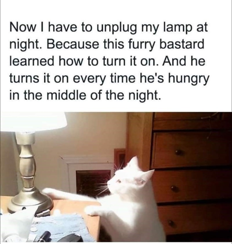 Cat - Now I have to unplug my lamp at night. Because this furry bastard learned how to turn it on. And he turns it on every time he's hungry in the middle of the night.