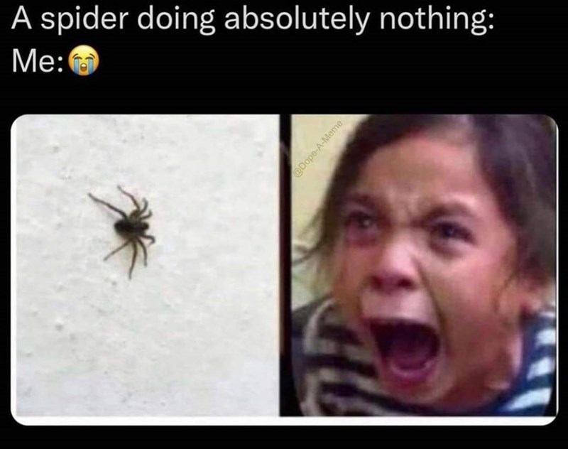 Photograph - A spider doing absolutely nothing: Me: @Dope-A-Meme