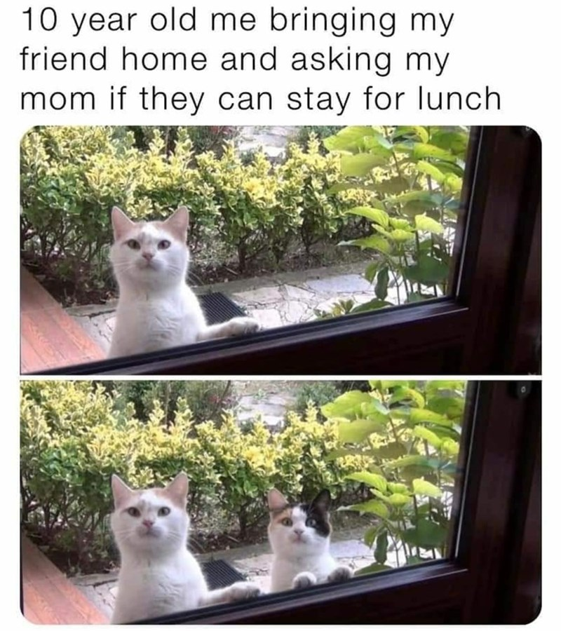 Cat - 10 year old me bringing my friend home and asking my mom if they can stay for Ilunch