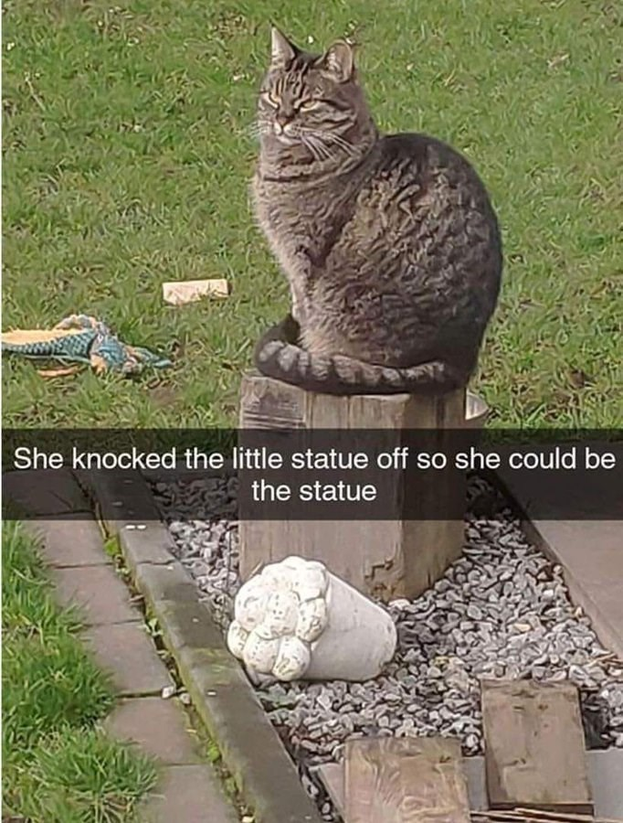 Cat - She knocked the little statue off so she could be the statue