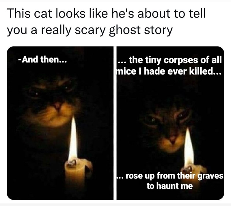 Photograph - This cat looks like he's about to tell you a really scary ghost story -And then... ... the tiny corpses of all mice I hade ever killed... rose up from their graves to haunt me