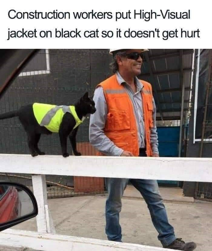 High-visibility clothing - Construction workers put High-Visual jacket on black cat so it doesn't get hurt