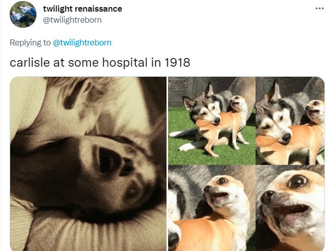 Dog - twilight renaissance @twilightreborn ... Replying to @twilightreborn carlisle at some hospital in 1918