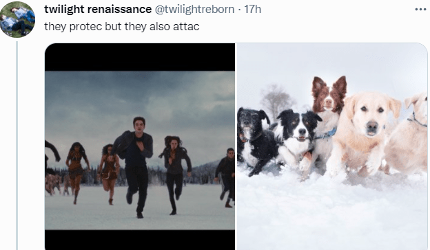Dog - twilight renaissance @twilightreborn · 17h ... they protec but they also attac