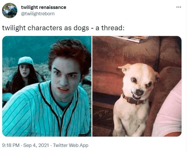 Dog - twilight renaissance @twilightreborn twilight characters as dogs - a thread: 9:18 PM - Sep 4, 2021 - Twitter Web App