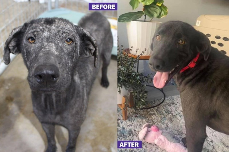 Dog - BEFORE AFTER