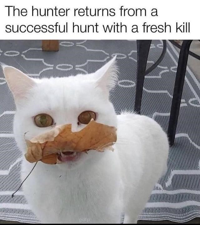 Cat - The hunter returns from a successful hunt with a fresh kill gdip