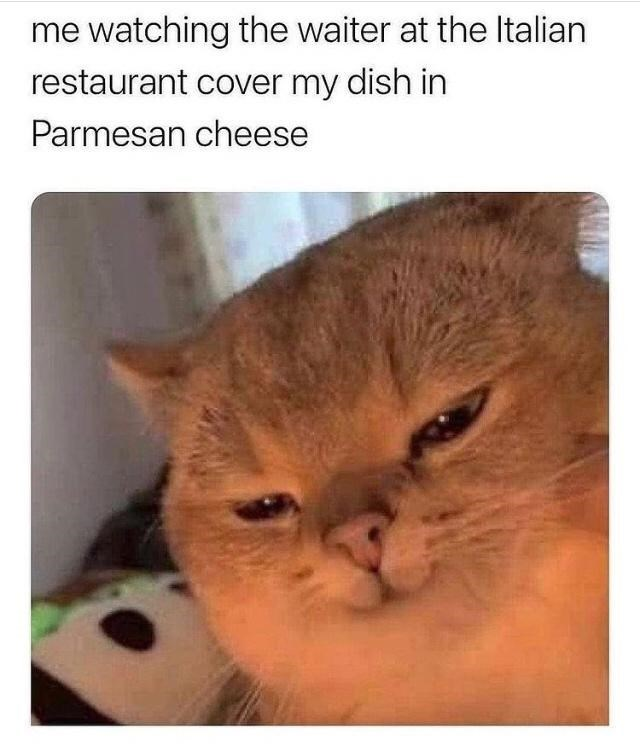 Cat - me watching the waiter at the Italian restaurant cover my dish in Parmesan cheese