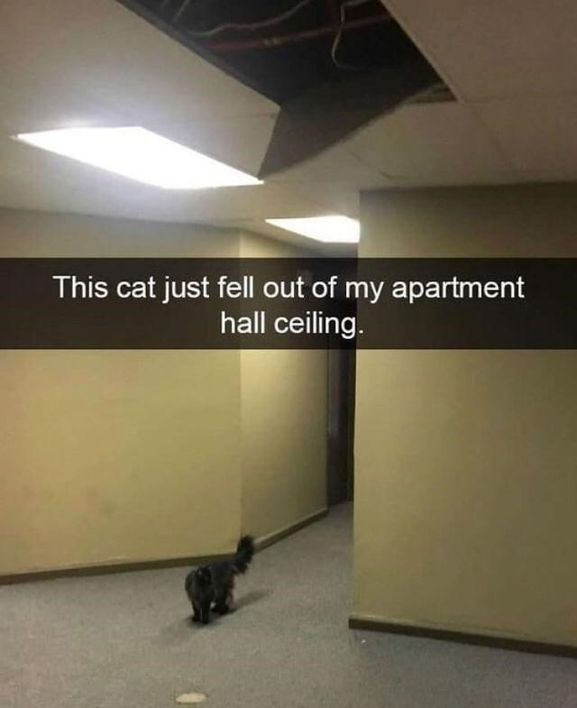 Cat - This cat just fell out of my apartment hall ceiling.