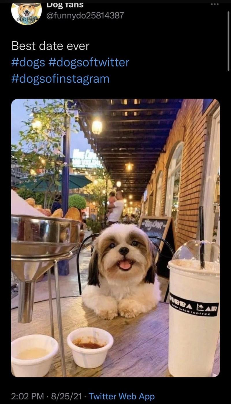 Dog - Dog fans DOGEAN OCFAR @funnydo25814387 Best date ever #dogs #dogsoftwitter #dogsofinstagram BBA EAB uIce.coffee 2:02 PM · 8/25/21 · Twitter Web App