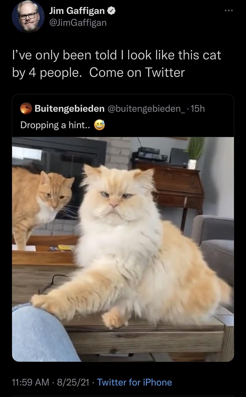 Cat - Jim Gaffigan O @JimGaffigan I've only been told I look like this cat by 4 people. Come on Twitter Buitengebieden @buitengebieden_ · 15h Dropping a hint.. 11:59 AM · 8/25/21 · Twitter for iPhone
