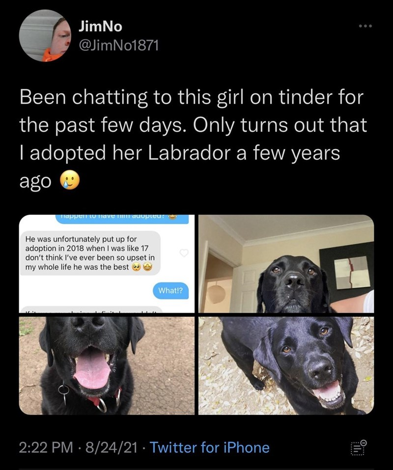 Dog - JimNo ... @JimNo1871 Been chatting to this girl on tinder for the past few days. Only turns out that I adopted her Labrador a few years ago Tiappen O Tnave TilI auopted? e He was unfortunately put up for adoption in 2018 when I was like 17 don't think I've ever been so upset in my whole life he was the best What!? 2:22 PM · 8/24/21 · Twitter for iPhone ......