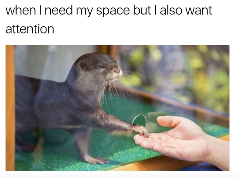 Organism - when I need my space but I also want attention